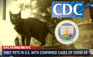 First Pets in U.S. with confirmed cases of covid-19.png