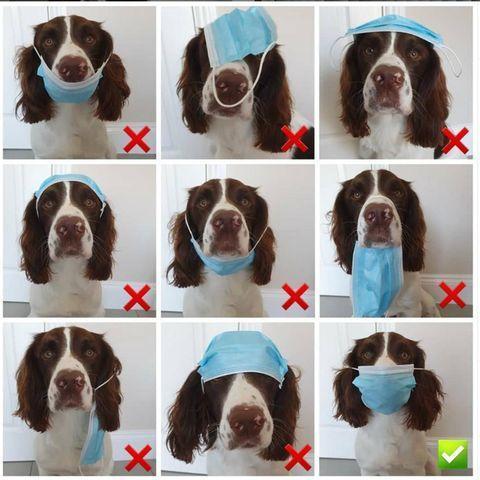hund-traegt-maske.jpg.4ecccf93e30b536c826d600f067e2e17.jpg
